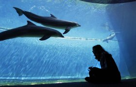 Working Spaces - <p>GENOVA AQUARIUM, Genova, Italy</p>